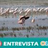 La organización conservacionista SEO/BirdLife advierte de que el acuífero de Doñana está en una situación de prealerta por sobreexplotación