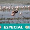 El problema del agua en Doñana viene de lejos y no se soluciona con trasvases, según ecologistas