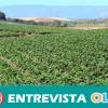 El SAT y jornaleras piden más control e inspecciones para que se cumpla con lo acordado en el convenio del campo de Huelva