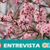 Las Rutas del Almendro en Flor y las Jornadas Gastronómicas de la Almendra se consolidan como recurso turístico en la Comarca de Filabres-Alhamilla