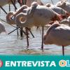Adelante Andalucía señala que la conservación de los humedales de Doñana debe empezar por derogar proyectos industriales que amenazan su protección