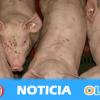 El proyecto de una macrogranja de cerdos entre las provincias de Granada y Jaén genera un movimiento ciudadano de protesta
