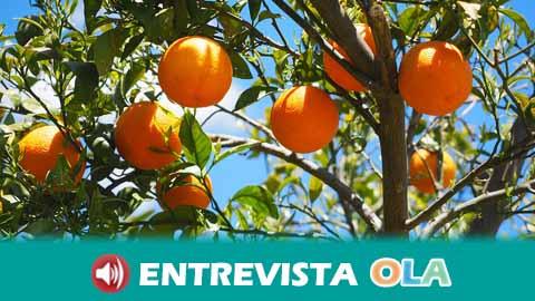 La Unión de Pequeños Agricultores de Andalucía piden un Plan Integral que acabe con la problemática de los precios de los cítricos