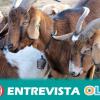 Andalucía acoge una jornada técnica sobre el uso de fitoterapia natural en el sector caprino lechero
