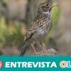 """La alondra ricotí, el ave """"más rara de España"""", puede desaparecer de Andalucía en unos cinco años"""