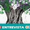 El olivar, el aceite de oliva y el oleoturismo como protagonistas del II Premio Internacional de Relato Corto de Jaén