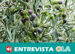 La situación económica del cultivo del olivar se ha vuelto insostenible