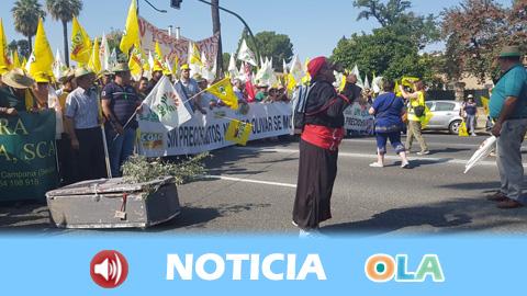 Multitudinaria manifestacion del sector del olivar para denunciar los bajos precios del aceite de oliva