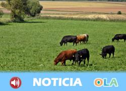 La organización agraria COAG-Andalucía advierte de los daños en los cultivos de cereales y en los sectores ganaderos por la falta de agua