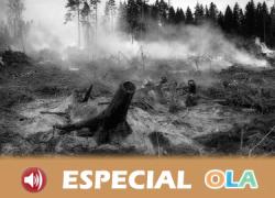 La repoblación tras los incendios sigue siendo una asignatura pendiente en Andalucía