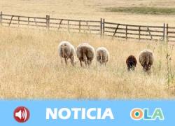 La sequía está haciendo mella en la ganadería de la zona norte de Córdoba