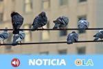 Colectivos ecologistas alertan de los efectos nocivos del calor en las aves que conviven con los humanos en las áreas urbanas