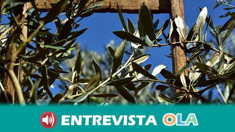 COAG celebra hoy en el municipio malagueño de Campillos el encuentro 'Protección de suelos y olivar ecológico'