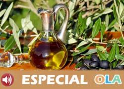 Infaoliva y COAG Andalucía lamentan que las administraciones no sofoquen con medidas reales y eficaces la crisis del sector olivarero que ya ha anunciado nuevas movilizaciones