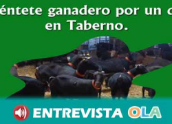 Taberno, en Almería, ofrece un amplio catálogo de opciones para adentrarnos en el estilo de la vida rural, sus tradiciones y gastronomía