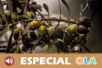 El sector oleícola de la provincia de Jaén recibe el apoyo de la ciudadanía y de las instituciones locales en una jornada de reivindicación histórica