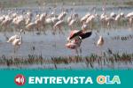 Los municipios con Parques Nacionales piden mayor participación en su gestión y financiación para actuaciones en estos territorios protegidos