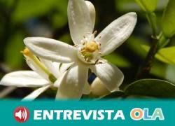 COAG Andalucía pide ayudas urgentes para el sector de la floricultura por la falta de ingresos derivados de la suspensión de fiestas y eventos sociales por la crisis sanitaria